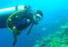 Scuba diving in wonderland