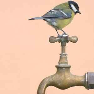 tap water 300 lk