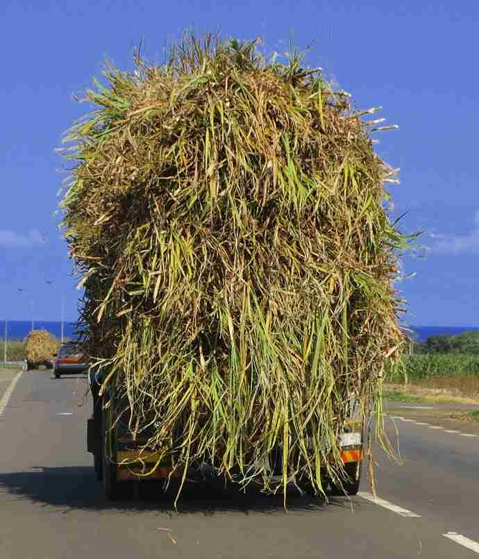 Truck overloaded with sugarcane