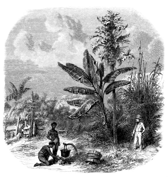 plantation-life-slavery