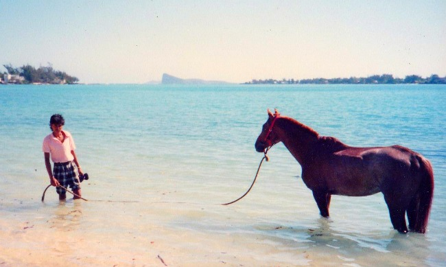 Horse bathing Grand Bay Mauritius