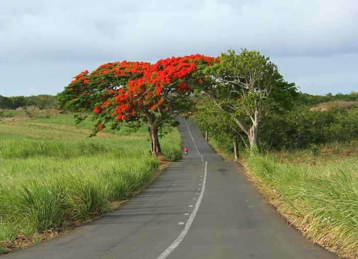 Country road Mauritius