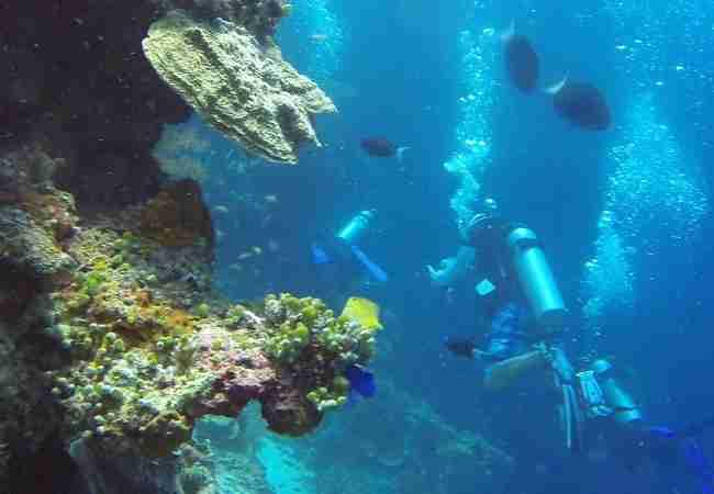 Wall scuba diving