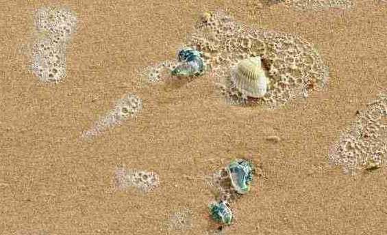 Blue bottles on beach