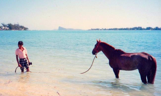 Horse bathing Grand Bay Mauritius