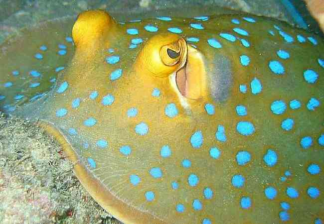 Colourful ray