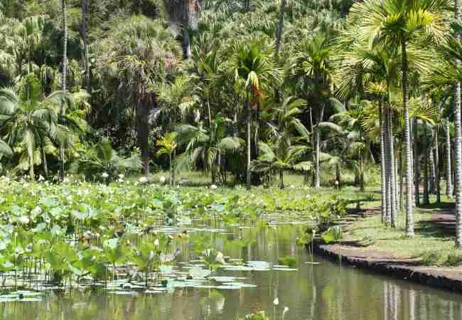 Botanical Garden in Mauritius