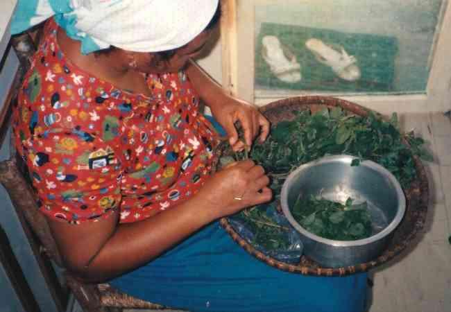 Cook preparing wild herbs
