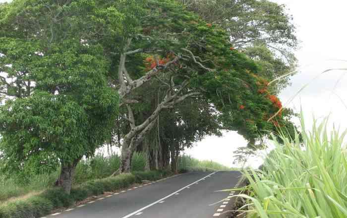 Road Map Of Mauritius Latest Updates - Map mauritius roads