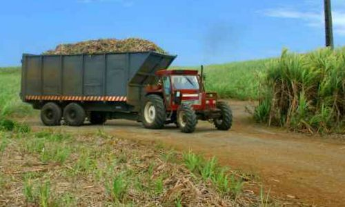tractor carrying sugarcane
