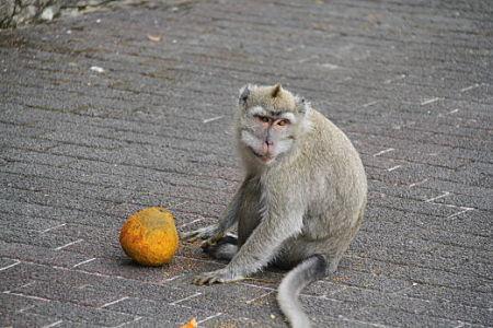 Monkeys-at-Grand-Bassin-Mauritius