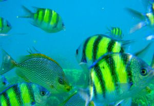 Many tropical fish